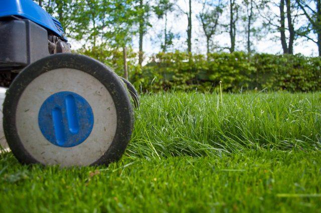 Elektryczna kosiarka do trawy – jaką wybrać?