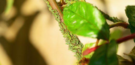 Ochrona roślin przed szkodnikami