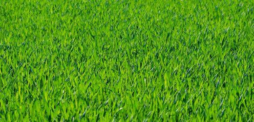 Jak wykorzystać obrzeża trawnikowe w ogrodzie? 4 pomysły!