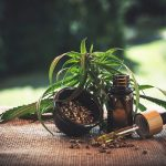 Czy konopie siewne można hodować w ogrodzie ?