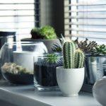 Grow box – łatwa uprawa roślin