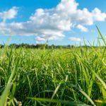 Gdzie kupić nasiona trawy? Jak często ją podlewać po zasianiu?